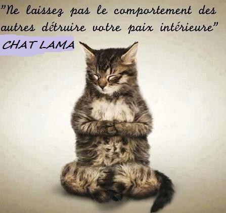 chat dalaï lamav2